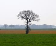 Foto: boom, fier in het landschap.