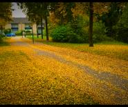 Foto: herfstblad in Leusden.