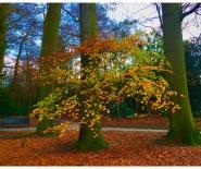 Foto: herfstblad van groen naar donkerrood.