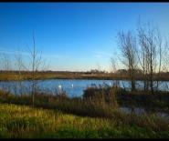 Foto: meertje in het buitengebied.