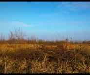 Foto: grassen tot aan de horizon.