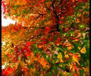 Foto: bladeren in herfstkleuren.